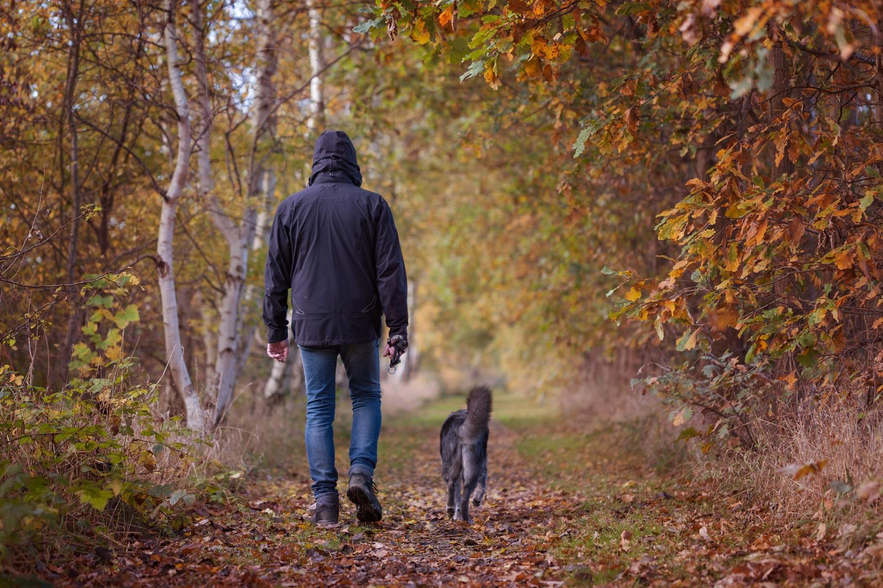 autumn-walk-1792812_1920