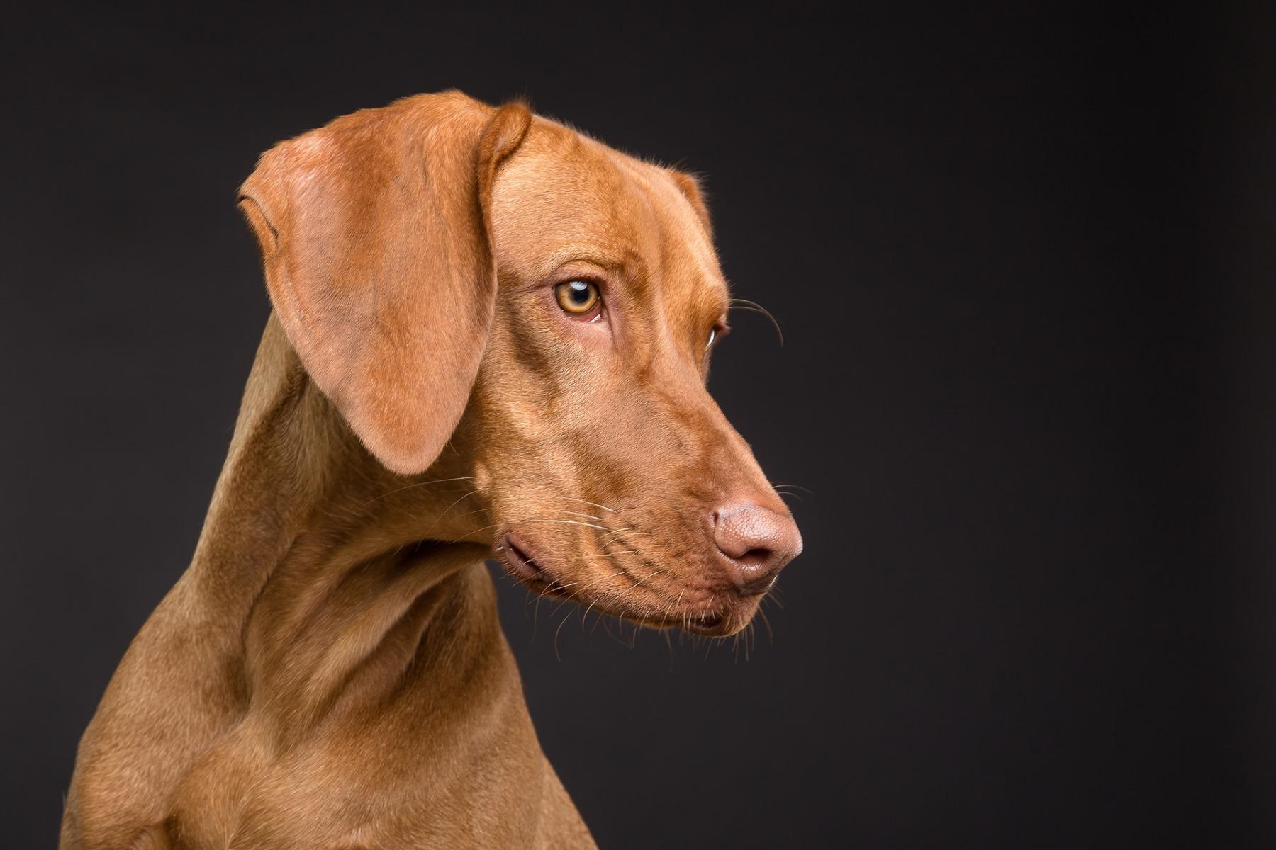 dog-3277417_1920